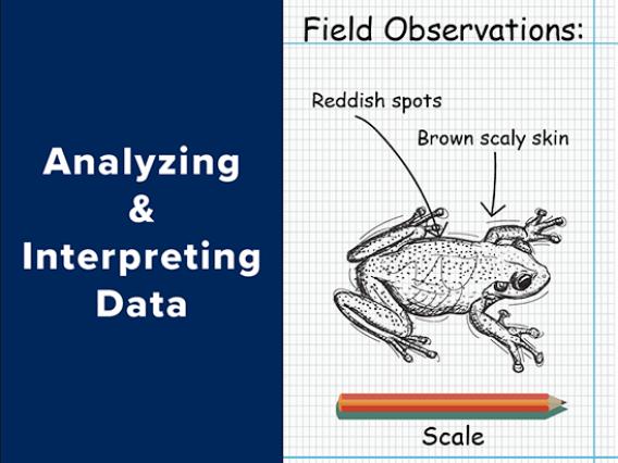 Analyzing and Interpreting Data